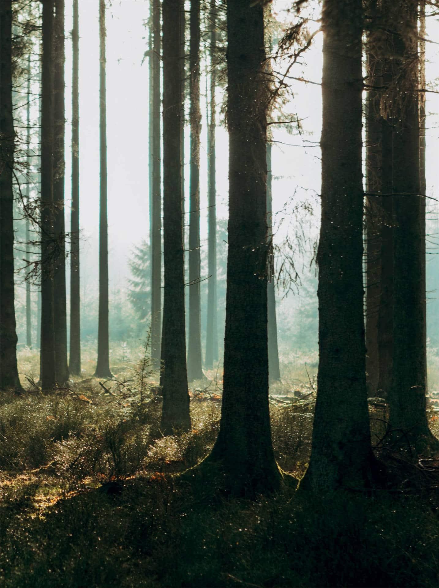 terra-nostra-urban-forest-miyawaki